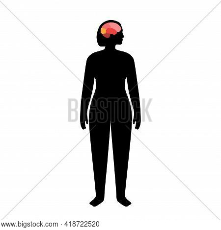 Brain In Female Body For Neurology Clinic. Occipital, Frontal, Parietal And Temporal Lobe. Intellect