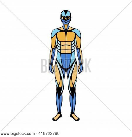 Human Muscular System. Structure Of Muscle Groups And Ligaments Of Men In Front View. Biceps, Trapez