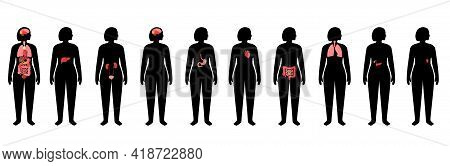 Internal Organs In Woman Body. Brain, Stomach, Heart, Kidney, And Other Organs Medical Icon In Femal