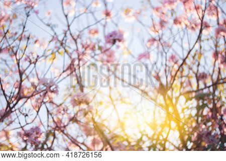 Blurred Natural Pink Spring With Bright Light Background, Beautiful Nature Bloom Tree With Sunlight.