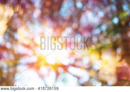 Abstract Blurred Natural Pink Spring With Bright Light Background, Beautiful Nature Bloom Tree With