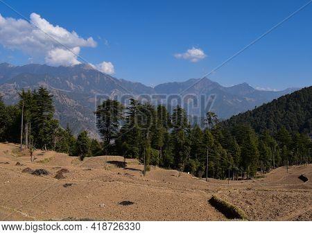 Mountain Valley Fields And Cedar Deodar Trees