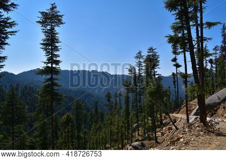 Rural Picture Mountain Valley Beautiful Deodar Forest And Dirt Road