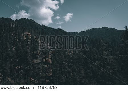 Landscape Picture Of Dark Himalayan Cedar Trees Forest