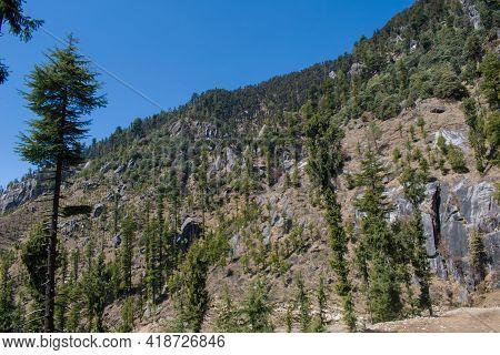 Beautiful Mountain Full Of Rocks And Himalayan Cedar (deodar) Trees In Himachal Pradesh, India