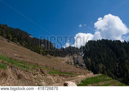 Fields In Slope Of Almost Sixty Degree And Himalayan Cedar Forest And Dirt Road