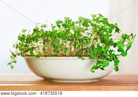 Micro Greens. Radish Sprouts In A Bowl