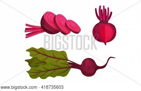 Beetroot Or Red Beet With Top Leaves Vector Set