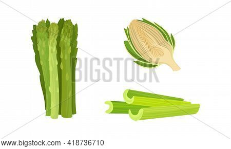 Celery, Asparagus And Globe Artichoke As Cultivated Vegetable For Vegetarian Nutrition Vector Set
