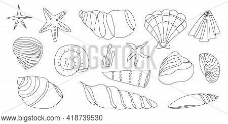 A Set Of Seashells In A Black And White Outline. Coloring. Vector Illustration. Set Of Seashells.