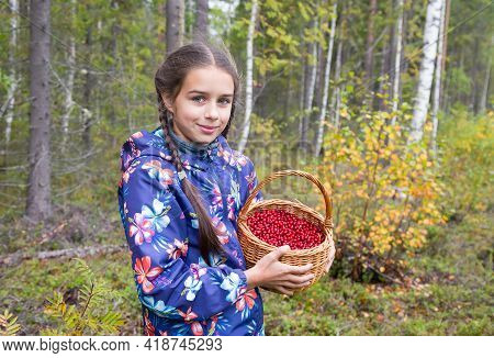 Cute Teenage Caucasian Girl Is Holding A Wicker Basket Full Of Red Ripe Wild Lingonberry In Northern