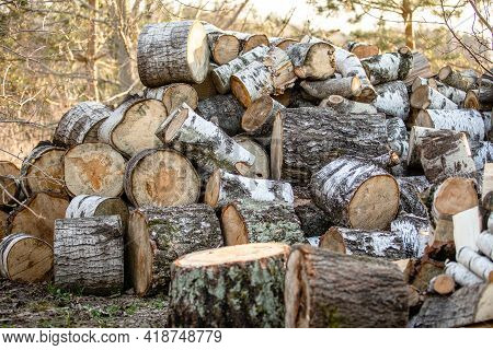 A Big Pile Round Cuts Of Wood. The Logs Are Sawed From The Trunks Of Birch Stacked In A Pile.