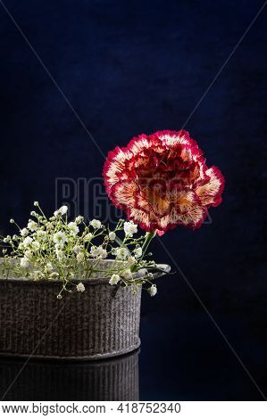 Red Variegated Carnation And Small White Flowers In A Vase On A Dark Background. Postcard. Place For