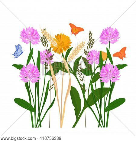 Grass Meadow Vector Stock Illustration. A Field With Medicinal Plants. Clover, Chamomile, Marigold,