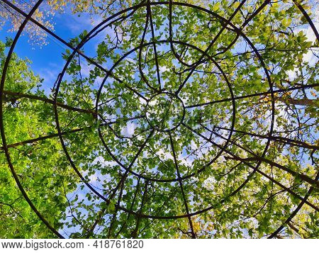 Low Angle Shot Of Circular Metal Plant Arbor In The Garden Under The Trees