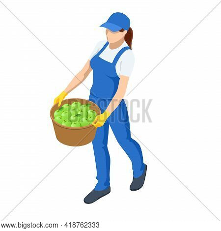 Agricultural Work. Isometric Woman Carries A Basket Of Crops, Woman Holding Basket With Vegetable. F