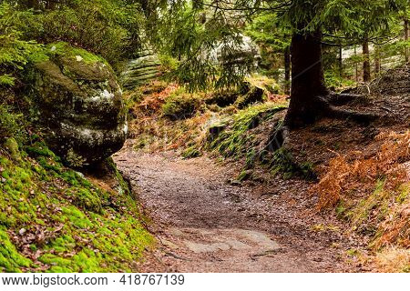 The Hike Path In A Deep Forest In Table Mountain. Natural Parkland. Nature Background