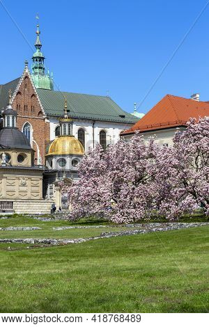 Krakow, Poland - April 28, 2021 : Blooming Magnolia Trees On The Wawel Hill Next To 11th Century Waw