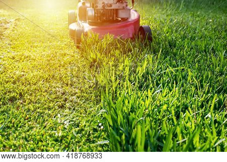 Mowing A Lawn With A Old Style Petrol Gasoline Lawnmower. Red Lawn Mower Cutting Grass . Gardening C