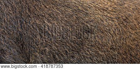 Close-up on Wild boar coat, Skin, fur