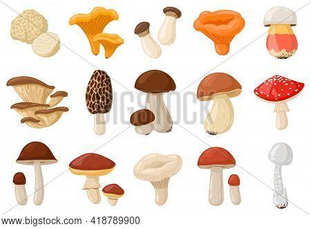 Cartoon Mushrooms. Poisonous And Edible Mushroom, Chanterelle, Cep, Amanita And Truffle Isolated Vec