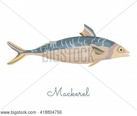 One Isolated Mackerel Fish Made In Flat Style. Colored Mackerel Without Outlines, With Light Glare A