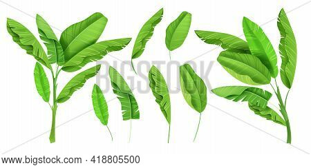 Banana Leaves Tropical Green Jungle Set, Summer Hawaii Plant Exotic Isolated Illustration. Floral Tr