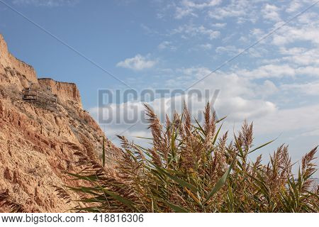 View Through Dense Green Reeds To A High Clay Slope By The Sea. There Is A Wooden Staircase And Whit