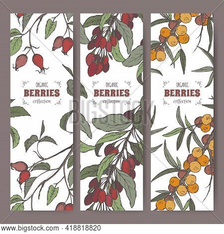 Set Of Three Labels With Dog Rose, Goji Berry And Common Sea Buckthorn Branch Color Sketch. Berry Fr