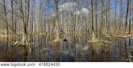 In The Wood The Spring Begins, Trees Stand In Water, A Sunny Day, Patches Of Light And Reflection On