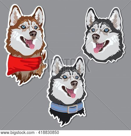 Dog Breed Husky Sticker. Animal Domestic. Vector.