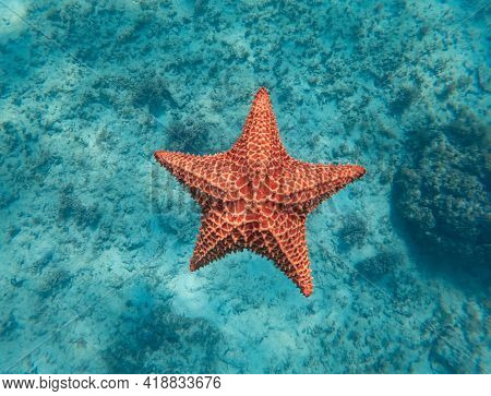 Huge Red Starfish Underwater In The Blue Clear Sea. Concept Of Holiday, Vocation And Relaxing