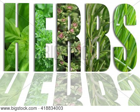 Various Herbs In Letters Of The Word Herbs, Collection Of Fresh Green Herbs In Text Shape