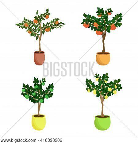 Citrus Fruit Trees Set. Home Saplings Of Tangerine, Grapefruit, Lemon And Lime In Flowerpots. Vector