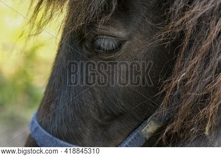 Close Up View Of Horse Animal Eye While Grazing In Rural Area, Domestic Animal Breed