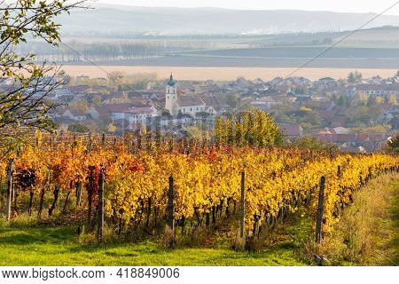 Autumn vineyards in Blatnice pod Svatym Antoninkem, Southern Moravia, Czech Republic