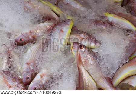 Group Of Northern Red Snapper Fishes Kept On Ice For Sale In The Fish Market.
