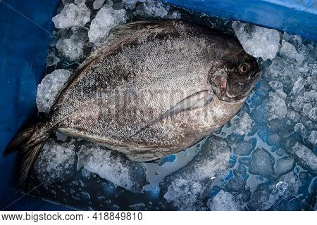 Top View Of Black Pomfret Fish Kept On Ice In A Container.