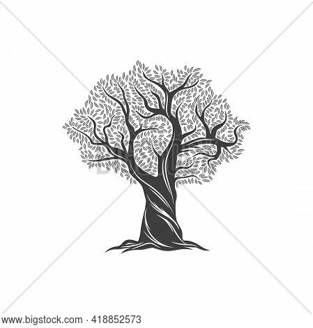 Olive Tree And Olive Oil Icon, Leaves On Branches, Vector Mediterranean Food And Extra Virgin Produc