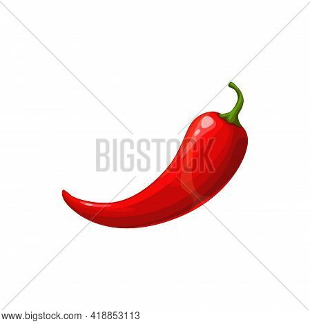 Jalapeno, Red Hot Chili Pepper Vector Vegetable. Chilli Savory Natural Condiment Isolated On White B