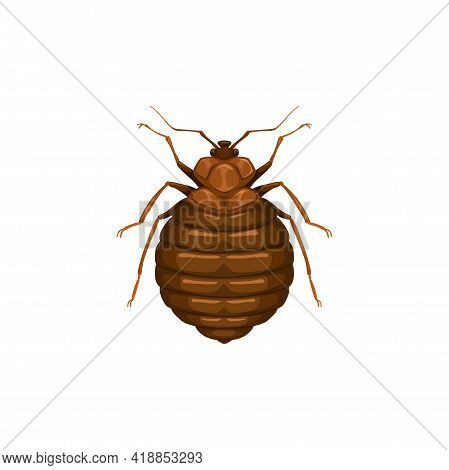 Bedbug Icon, Insect Parasite Or Bed Bug, Pest Control And Domestic Disinsection Service, Vector Isol