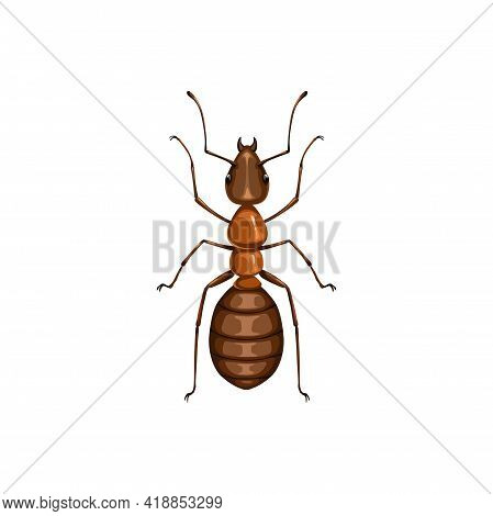 Ant Icon, Insect Pest Control, Parasites Extermination And Disinsection Service, Isolated Vector. An