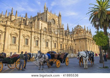 Horse Drawn Carriages In Seville