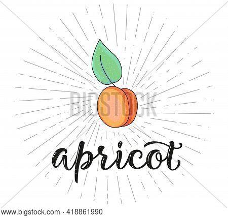 Apricot. Fruit Symbol For Farm Market Menu - Vector Stock Illustration