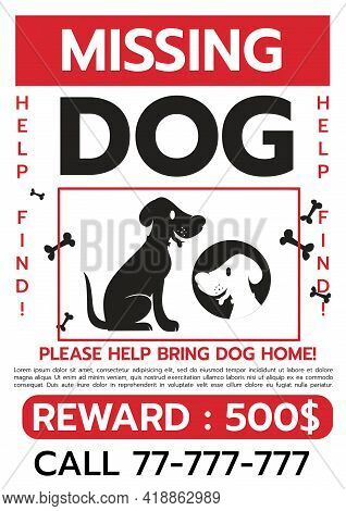 Lost Dog. Reward For The Find. Missing Poster Template. Lost Pet Poster. Sheet With The Announcement