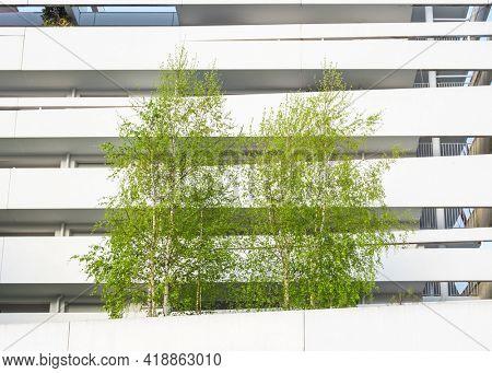 Birch trees and modern white building, spring season