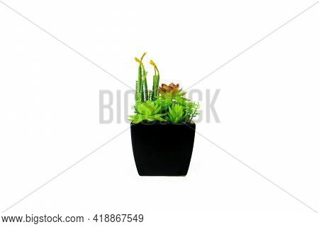 Flowers And Artificial Plants In Pot On White Background.
