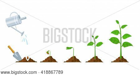 Green Sprout Grow. Seedling And Planting Phases. Plant With Leaves, Bean In Soil, Watering Can. Plan