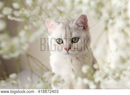 Portrait Of White British Cat, Green Eyes, White Floral Background