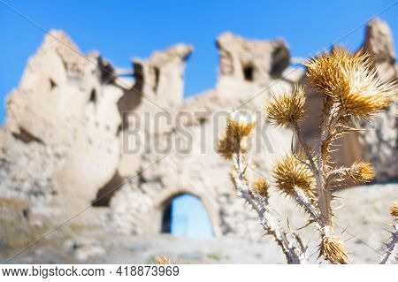 Close Up View Onto Dead Dried Flowers. Gate's Ruins Of Abandoned Medieval Ghost Town Ani Is On Blurr